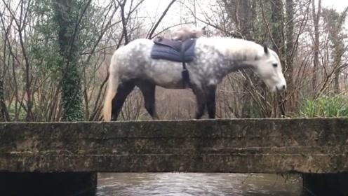 自己养的马却成了别人的坐骑,还不能发火,这也太难了吧