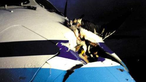 能飞11000米高的鸟,因为飞得太高曾经撞坏了飞机,求你别出门了