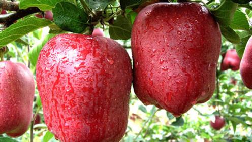 """秋天这4种""""应季水果""""放开了吃,维C多汁水足,好吃又不贵"""