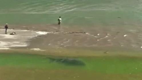 钓鱼:钓鱼人只顾着看浮漂,殊不知背后有大鱼悠然游过