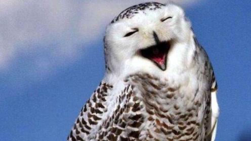 """为何猫头鹰""""笑""""就有人去世?没想到真的有科学依据!看完你就懂了"""