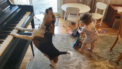 狗狗和宝宝独自在家,主人查看监控后忍不住笑喷,镜头记录全过程