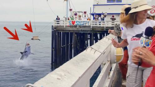 志愿者们正在放生海豹,进行到一半时,镜头拍下惊险瞬间