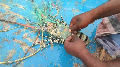 渔网缠上来大龙虾,赶紧解出来!