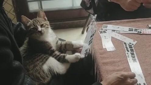喵星人:老头,说实话你这牌打的我看着闹心,现在就想睡觉!