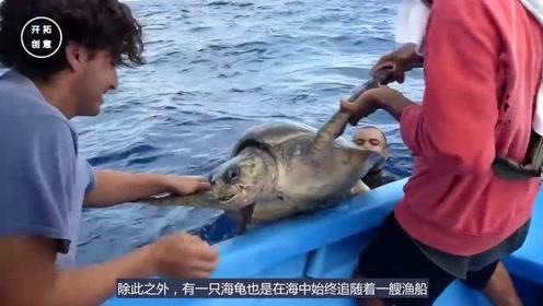 一直大海龟紧随游船不愿离去,好心人捞起来检查一番,心都要碎了