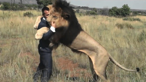 小伙将狮子从小养大,8年后小伙去看狮子,狮子向他猛扑过来!