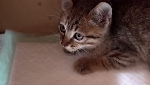 要把小奶猫送人的时候,猫妈抱着小猫咪紧紧的,脸上露出慌张的表情