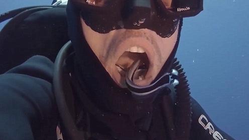 潜水员在水底张开嘴,没想到突然钻进去几条小鱼,不怕被吃掉吗?