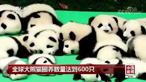 全球大熊猫圈养数量达到600只