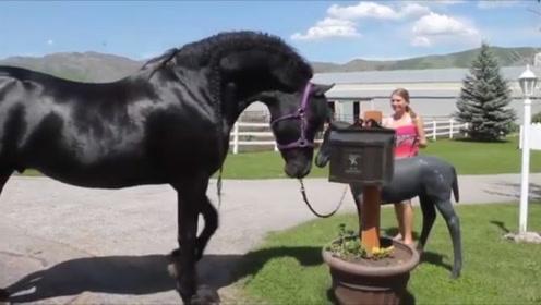 马儿散步遇到雕塑小马驹,它的举动太搞笑了,镜头记录全过程