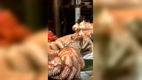 日本人穿丧服祭奠螃蟹 感谢馈赠