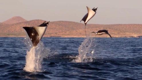 男子出海钓鱼看到罕见大鱼飞翔,要不是亲眼所见,真不敢相信!