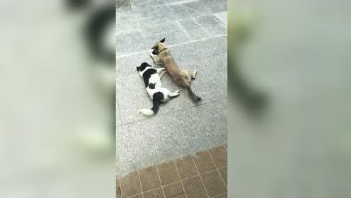 好无聊啊!我跟你睡一起可以吗!