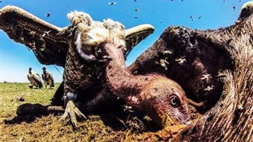 世界上最脏的动物,到底有多脏呢?看完真的要吐了