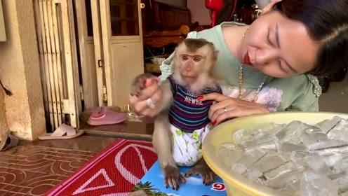 猴子当孩子来养,吃同一个果冻,网友:比人过的都惬意