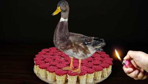2W根火柴可以烤熟鸭子吗?