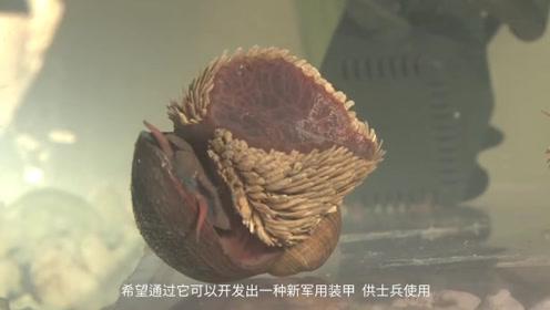 外壳最坚硬的蜗牛,美国人拿它研究军用装甲,结果未成!