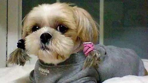 主人让狗狗和女儿单独在家,结果回家发现狗狗完全变了样
