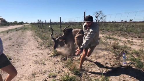 男子解救被困的羚羊,获救之后羚羊突然暴起,镜头拍下惊险一幕