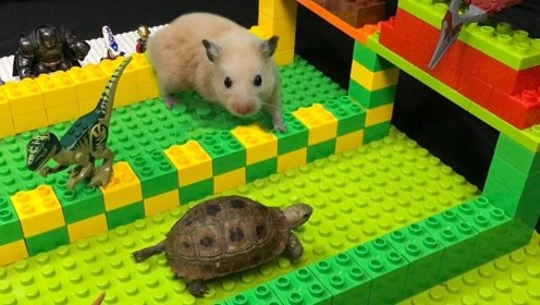 乌龟和仓鼠赛跑,过程迷之尴尬,这是万万没想到的