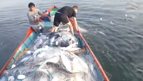 渔网挂满了鱼,鱼太多最后都拉不动了!