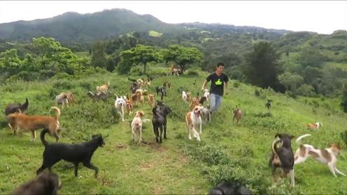 美国夫妇斥资20万买了座山,用来收养1000只流浪狗,场面令人咋舌