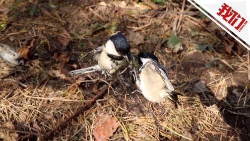 大量迁徙候鸟被诱鸟器吸引 通化森林公安解救3000余只野生鸟类