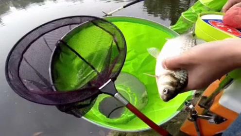 采用粘颗粒钓法,作钓黑坑应对猾口鱼效果明显