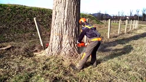 农村伐木工发明用楔子伐树,让伐树更高效,既省力又安全