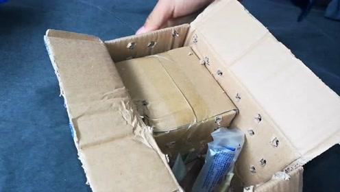 开箱一只从养殖场捎回来的小鸟,从小人工养大的,过几天就会飞了