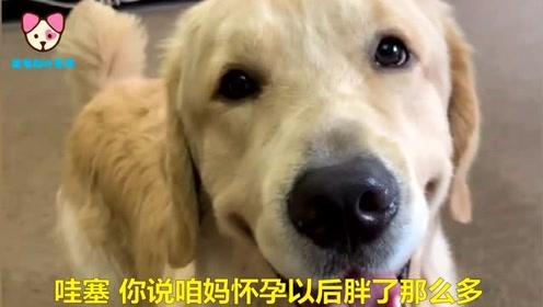 狗狗暗骂女主长得胖,女主人直接把狗狗打到脑震荡