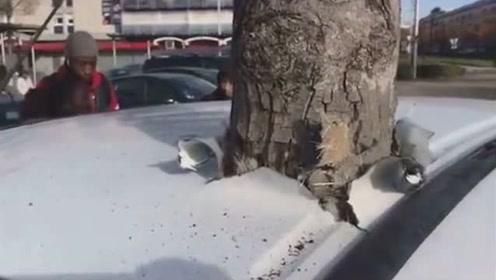那么问题来了!先有车还是先有树?