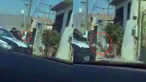 实拍:墨西哥警察搜查住宅时看门犬狂叫 警察开枪射杀看门狗