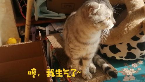 """小猫被主人""""恶搞"""",扭头就不再理主人了,猫:哼,我生气了"""
