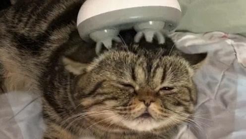 生活又要对我这只猫咪下手了,真的是猫生不易,太难了!