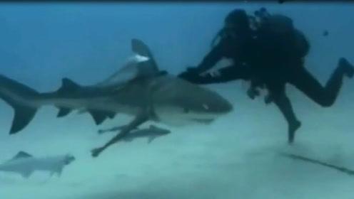 鲨鱼能否闻到一滴血的气味?外国小哥大胆挑战,画面太惊险刺激了