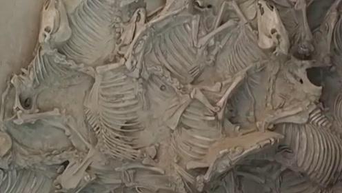 姜子牙墓葬被发掘,专家进入后错愕:简直是闻所未闻