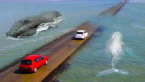 最危险的公路,没有限速一路狂飙才能活,政府:求求你开快点!