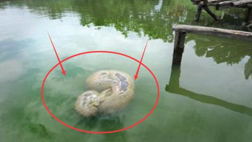 """湖中出现巨型""""水怪"""",渔民打捞上岸,全被眼前的一幕惊呆了!"""