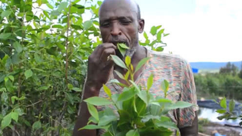 世界最贫穷的国家之一:人们不种粮食却种草,每天以草为食!