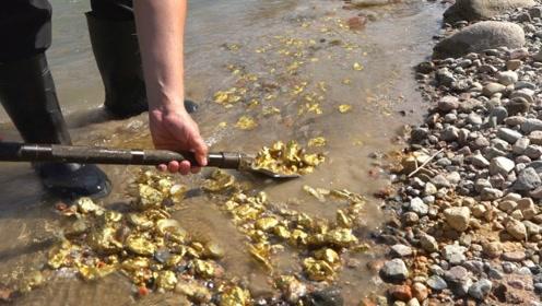 男子自带吸金属性,小河边散步竟捡到很多金子,用铁锹都铲不完!