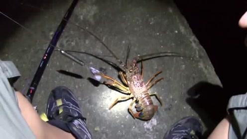 海钓龙虾,确实是技术活,脱钩脱到怀疑人生