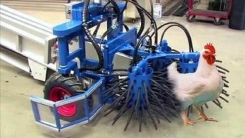 美国小伙发明一抓鸡神器,每小时抓几千只,见到原型你都不敢相信