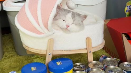 双十一给猫咪买了张粉嫩嫩的婴儿床,猫咪刚一进去就弹了出来?