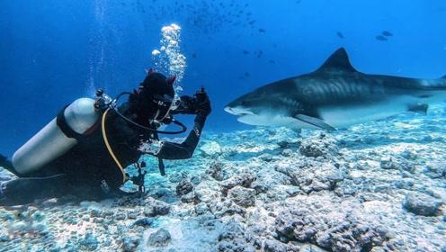 去过马尔代夫的人里面,只有万分之一去过这个岛:虎鲨岛