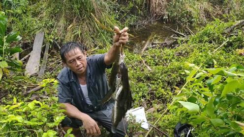 高手钓黑鱼从来不花钱,几个竹竿就搞定了,太省事了