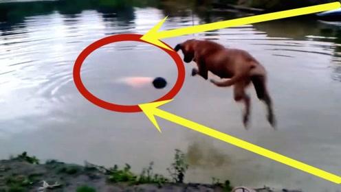 铲屎官假装溺水,下秒狗子一个举动,实在是太暖心!