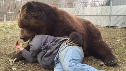 男子躺在棕熊怀里,不料棕熊朝男子咬去,场面真是太惊险了
