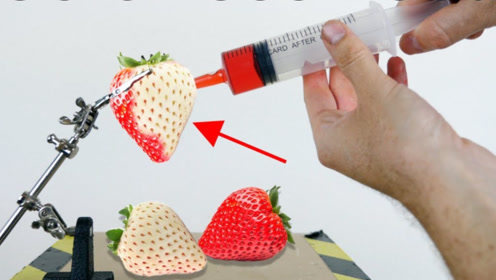 草莓去掉红色是啥样?牛人用化学液体测试,看完不敢相信!
